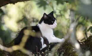 Illustration d'un chat.