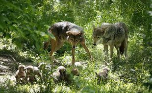 Des loups (illustration).