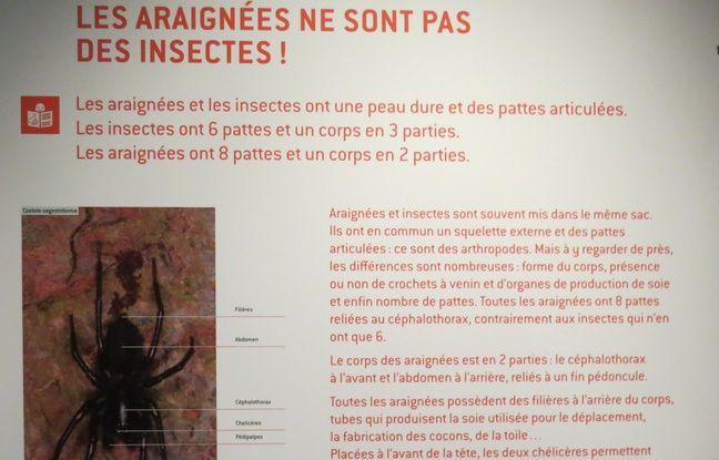 Un des panneaux de l'exposition :