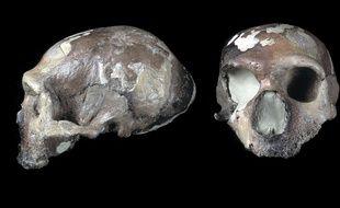 Une étude sur la machoire de Neandertal révèle que l'un d'eux soignait ses dents