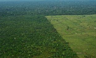 Une parcelle de forêt amazonienne après déforestation, au Brésil.