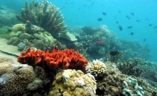 Une recherche publiée dans la revue américaine Science montre pour la première fois que le fait de croiser des coraux provenant de différentes latitudes peut aider à la survie des récifs