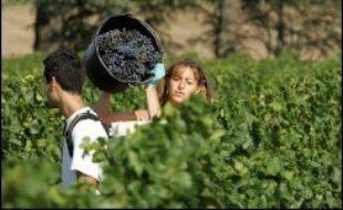 Déplacement des régions viticoles vers le nord, vendanges précoces, délocalisation des AOC, bouleversement des cépages: le monde du vin va devoir s'adapter au réchauffement climatique, préviennent les scientifiques.