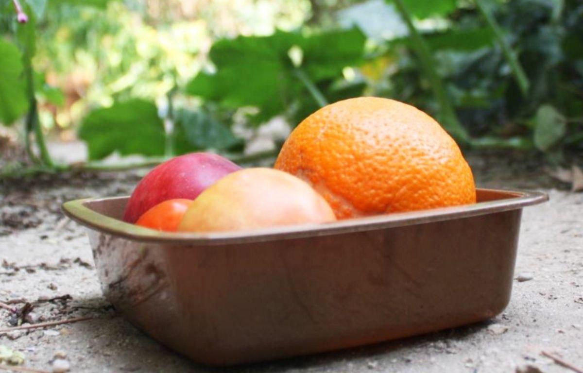 L'emballage est conçu à partir de déchets des industries alimentaires. – EuroBioCap