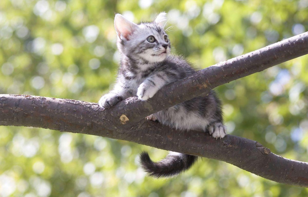 Un chaton dans un arbre. Illustration. – Superstock Sipa
