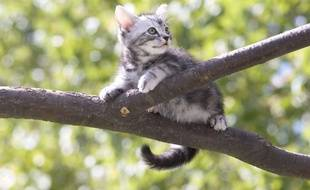 Un chaton dans un arbre. Illustration.