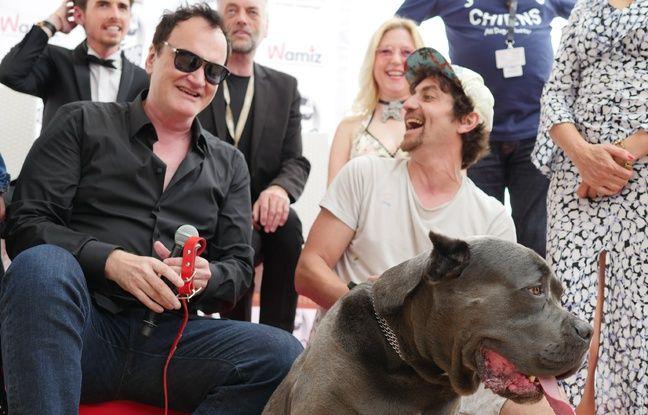 Festival de Cannes: Brandy, la chienne du film de Quentin Tarantino, reçoit la Palm Dog