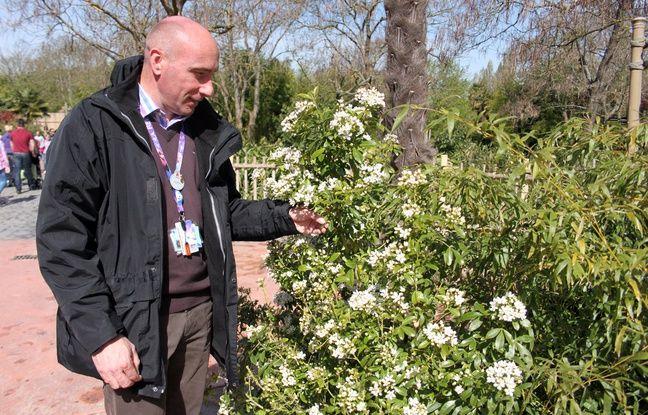 Pierrick Paillard, manager horticulture, devant un oranger du Mexique.
