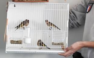 Une trentaine d'agents de l'Office national de la chasse et de la faune sauvage ont mené une opération d'envergure à la frontière franco-italienne pour démanteler le trafic d'oiseaux protégés importés d'Italie