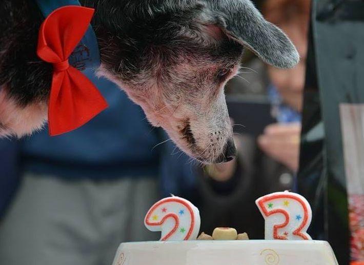 Floppy, le plus vieux chien du monde, est décédé dans son refuge