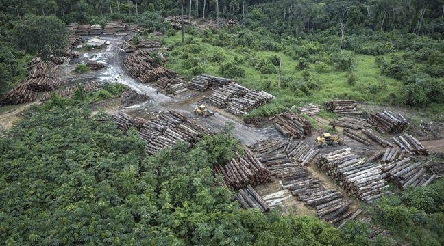Très forte augmentation des incendies en Amazonie en juillet