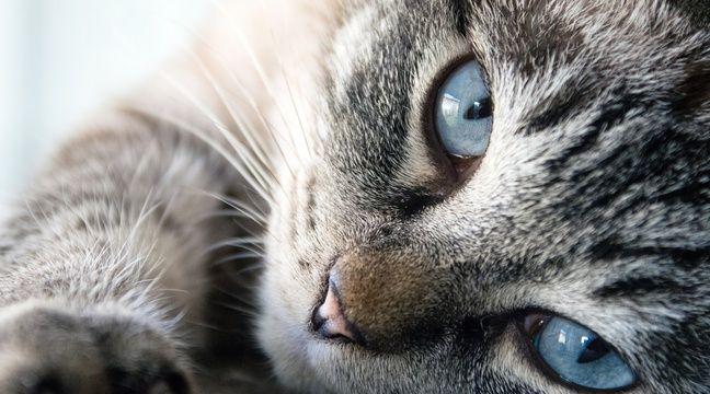 Soupçonnée d'avoir jeté par la fenêtre le chat de son ex pour se venger