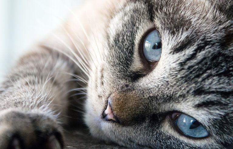 Les Chats S Attachent Autant A Leurs Maitres Que Les Chiens Selon Une Etude