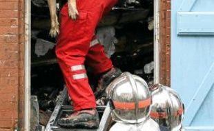 Le chien spécialisé des pompiers.