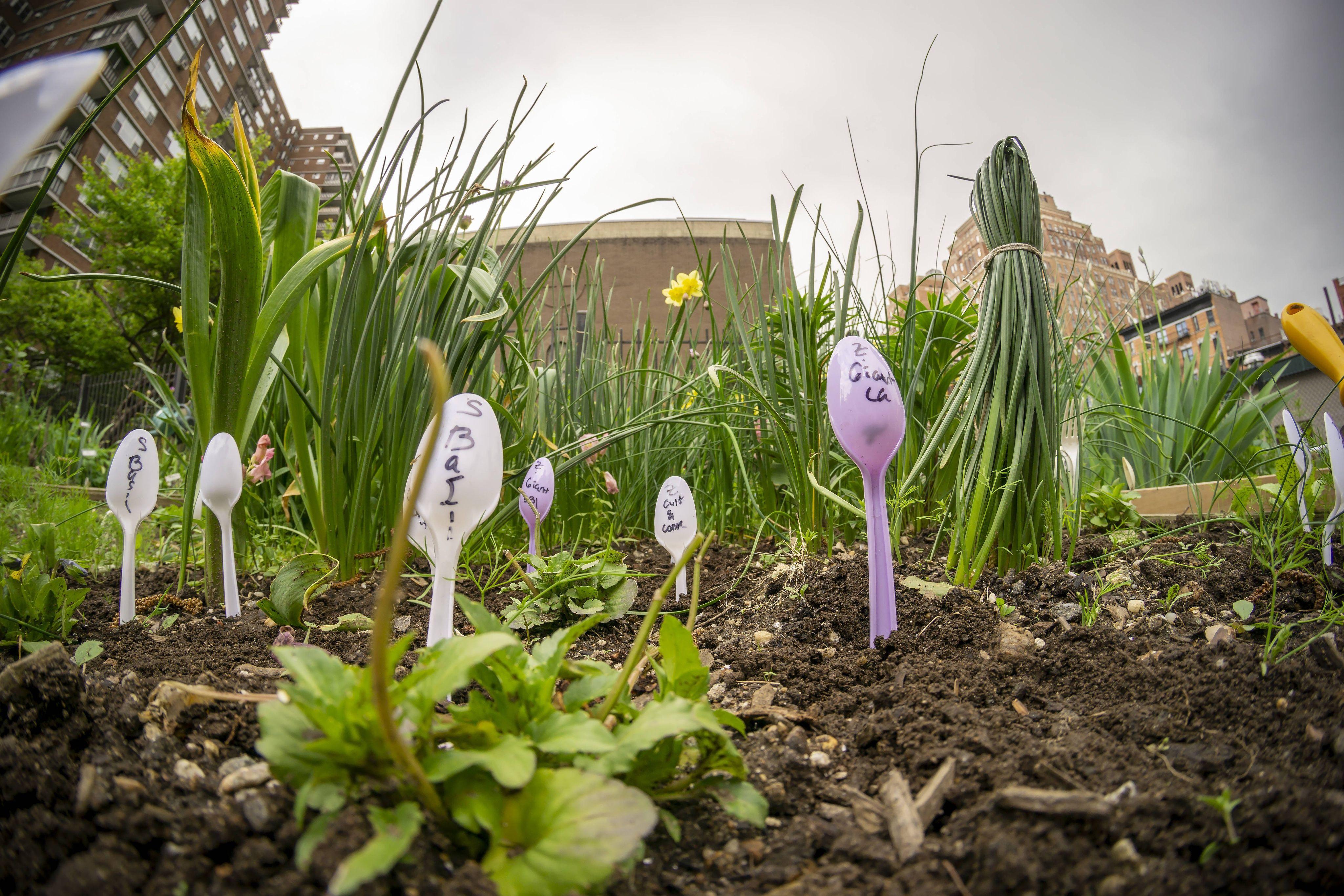 Toulouse : A l'heure de l'agriculture urbaine, peut-on cultiver bio dans un environnement pollué ?
