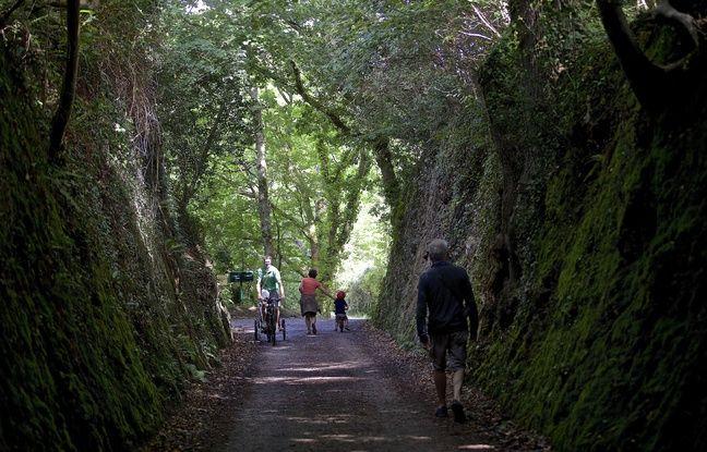 Bretagne: La région mise sur le bois et veut planter cinq millions d'arbres d'ici à 2025