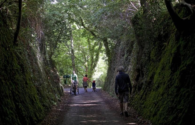 Bretagne : La région mise sur le bois et veut planter cinq millions d'arbres d'ici à 2025