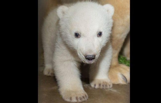 Première photo de l'ourson né le 7 novembre au zoo de Mulhouse. (crédit photo MIchel Foos).