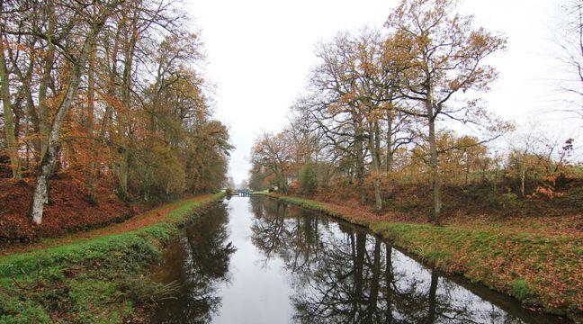 La Bretagne remplace des milliers d'arbres fragiles le long de ses canaux