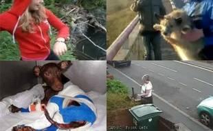 Ces cas de maltraitances d'animaux qui ont mobilisé le Web (montage)