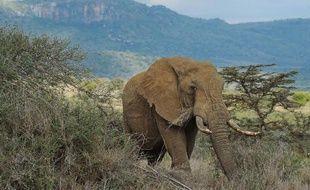 Un éléphant dans le sanctuaire d'Ol Jogi, à 300 km au nord de Nairobi, au Kenya, en août 2014