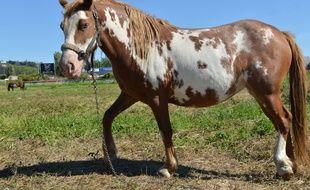 Le jeune cheval est décédé dans le week-end en Gironde.