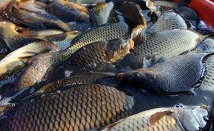 Des centaines de milliers d'alevins, des milliers de carpes et d'anguilles, ainsi que des tortues sont mortes dans l'étang du Moura à Avéron-Bergelle (Gers) après que des vandales eurent vidé l'eau en cassant la vanne de vidange, a-t-on appris lundi auprès du conseil général.