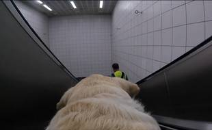 Kika aide Amit Patel au quotidien à se déplacer dans les transports londoniens.