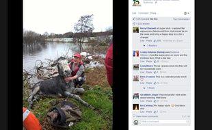 L'âne Mike, sauvé des eaux en Irlande, semble sourire à ses sauveteurs, le 6 décembre 2015.