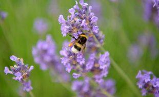 Une abeille et une fleur. (illustration)