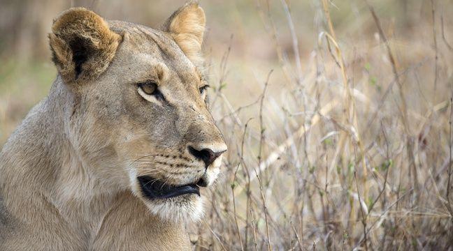 « Chez les mammifères sauvages aussi, les femelles vivent plus longtemps »