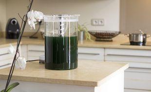 Le prototype de phytotière, sorte de yaourtière pour cultiver des micro-algues chez soi, développé par la start-up toulousaine Alg&You.