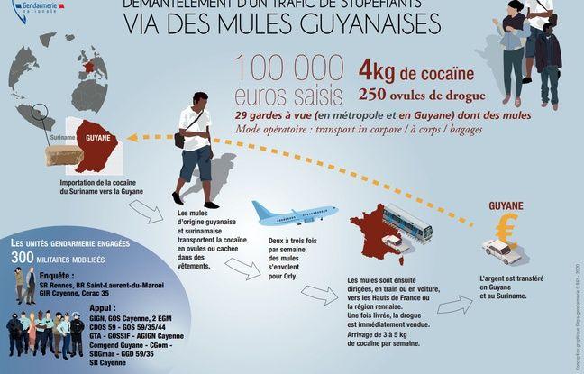Infographie réalisée par la Gendarmerie nationale pour expliquer le démantèlement d'un réseau d'importation de cocaïne depuis la Guyane.