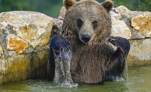 Loin des polémiques, les ours font leur vie. Illustration.