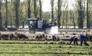 Un champ dans les Pays-de-la-Loire. (illustration)