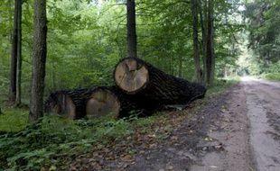 Des arbres abattus dans la forêt de Bialowieza en Pologne, le 20 août 2010