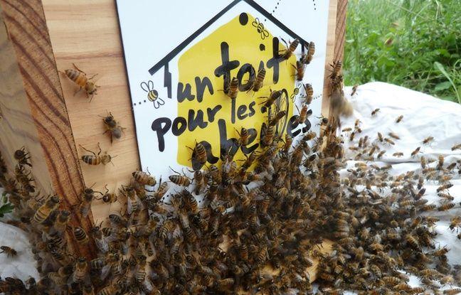 La plateforme Un toit pour les abeilles a été lancée en 2010 pour permettre à des citoyens et des entreprises de parrainer des ruches en échange de miel.