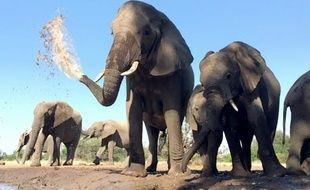 Le Botswana est le dernier pays où la population d'éléphants d'Afrique est conséquente.