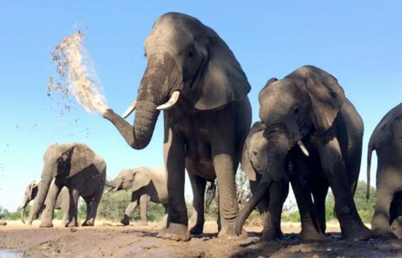 Botswana: Le pays veut légaliser la chasse aux animaux sauvages