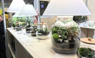 Green Cocoon, la lampe terrarium,  qui met en valeur les plantes, présentée au concours Lépine