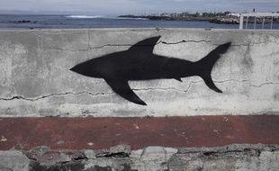 Tag représentant un requin à Saint-Pierre de la Réunion en 2013.
