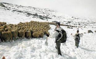 Sept heures ont été nécessaires aux 15 chasseurs alpins du 13e BCA pour sauver le troupeau.