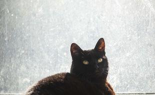 Illustration: Un chat noir observe la ville de New York depuis sa fenêtre.