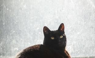 Illustration d'un chat noir.