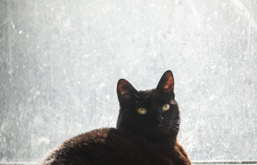 Les infos immanquables du jour: Le chat noir des stades, le général chef de chantier et la licorne qui a avalé Saint-Malo