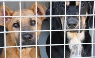 Chaque chien ne sort qu'une fois par semaine par manque de bénévoles.