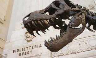 Le squelette du plus grand Tyrannosaurus Rex du monde, le 12 mai 2018 à Milan.