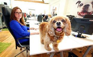 Amener son chien au travail... Une idée pas si farfelue.