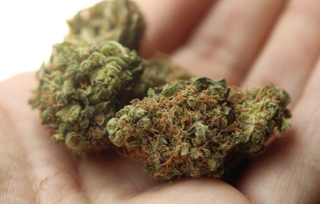 Cannabis: Le Luxembourg veut légaliser la production et la consommation, une première en Europe