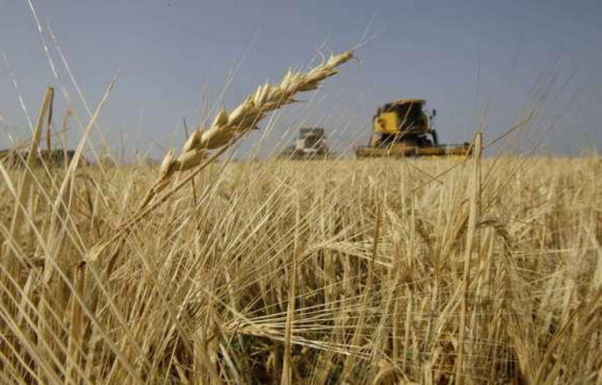 Un champs de blé au sud de Moscou, en Russie, en août 2010.  – Ivan Sekretarev/AP/SIPA